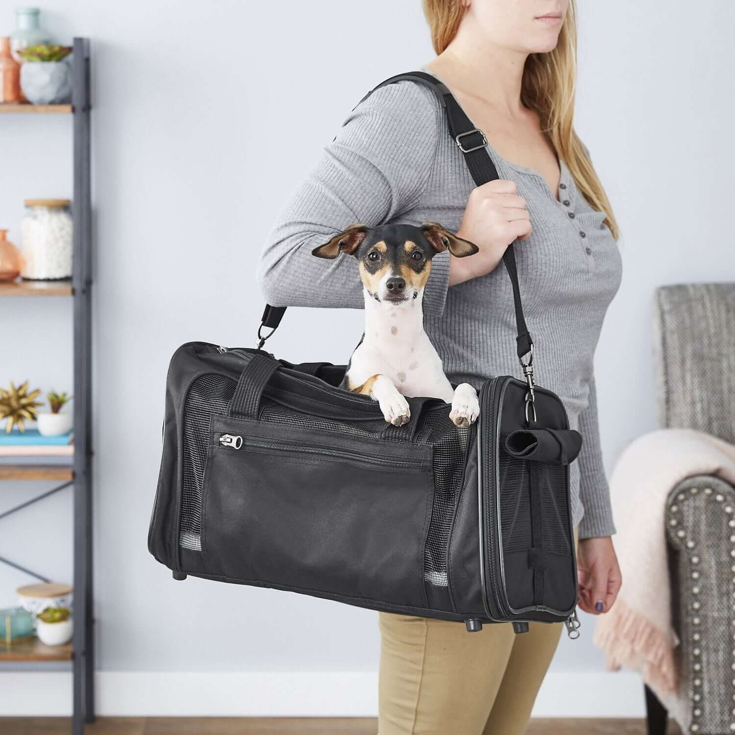 frisco pet travel carrier new year resolutions