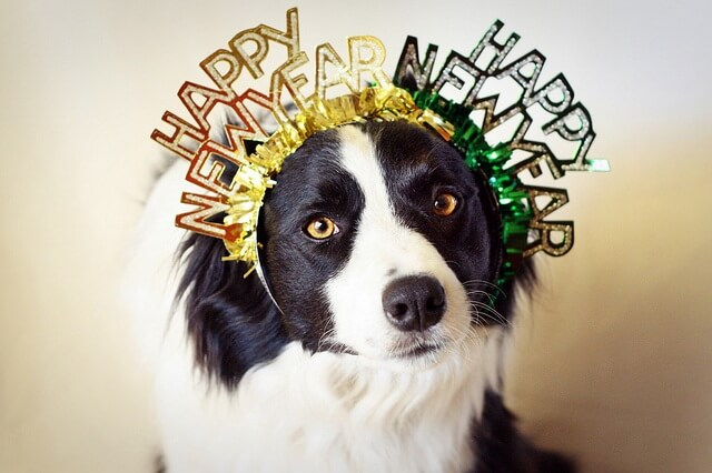 pet new years resolutions