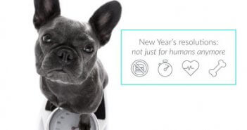 pet parent new years resolutions