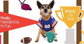 super bowl snacks pet safety dog