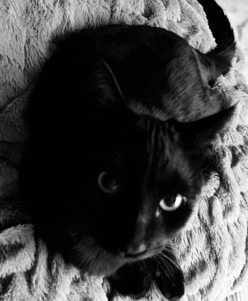 Cassandra Darens Cat