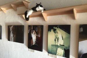 Pic of cat in Catfe