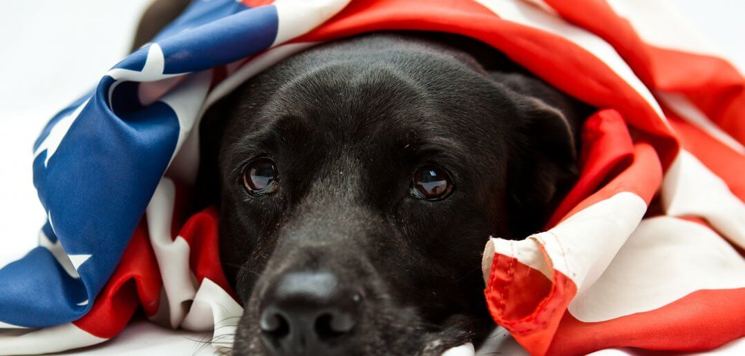 How to Help Your Pets During Firework Celebrations: Tips From AVMA