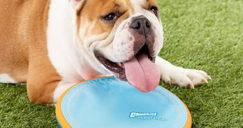 Chewy frisbee toy