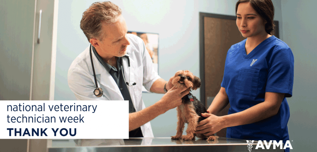 AVMA Celebrates National Veterinary Technician Week October 11-17