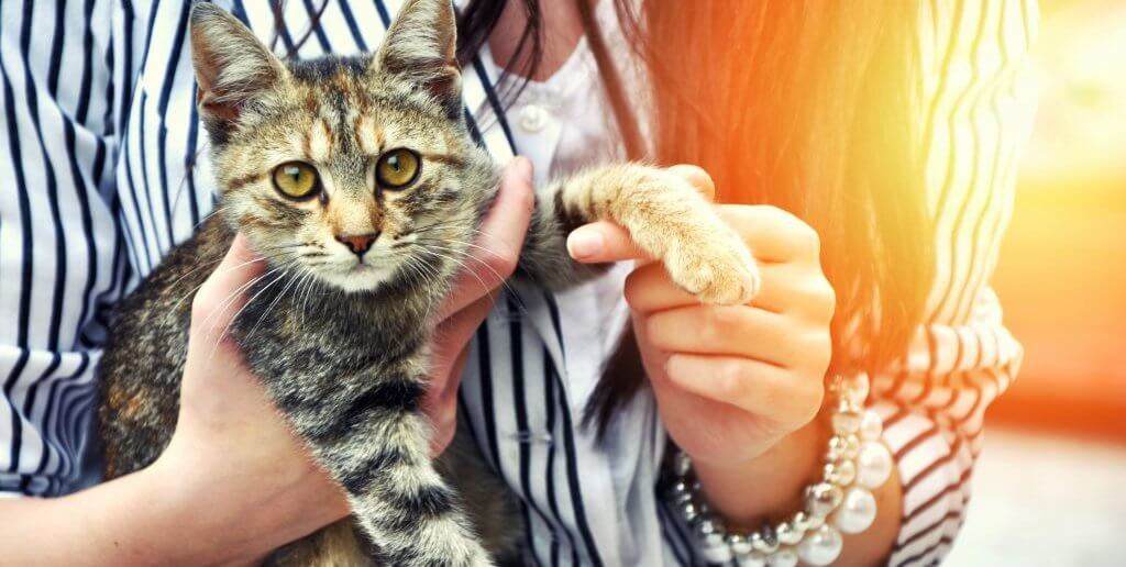 What Are the Different Ways to Prepare For Adopting a Cat?
